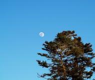 księżyc drzewo Zdjęcie Stock