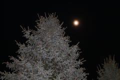 Księżyc drzewo Zdjęcia Royalty Free