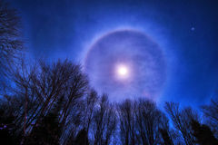 Księżyc halo nad Treetops Zdjęcie Royalty Free