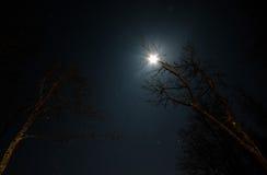 Księżyc i gwiazdy przez gałąź Fotografia Royalty Free