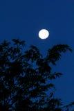 Księżyc II Zdjęcie Royalty Free