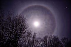 Księżyc korona słoneczna Nad Treetops Fotografia Royalty Free