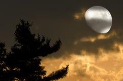 księżyc mistyczki noc Obraz Royalty Free