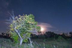 Księżyc nad samotny drzewo Zdjęcia Royalty Free