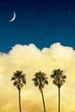 księżyc palmy fotografia royalty free