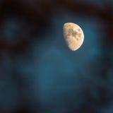 Księżyc przez drzew Zdjęcie Stock