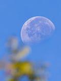 Księżyc Przez liści Zdjęcie Royalty Free