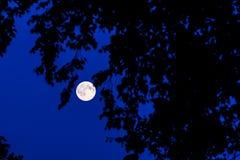 Księżyc w lesie Fotografia Royalty Free