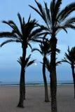 Księżyc w pełni i drzewka palmowe obrazy stock