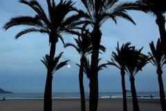 Księżyc w pełni i drzewka palmowe zdjęcie royalty free