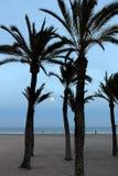 Księżyc w pełni i drzewka palmowe obrazy royalty free