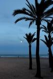 Księżyc w pełni i drzewka palmowe zdjęcia royalty free