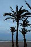 Księżyc w pełni i drzewka palmowe fotografia stock