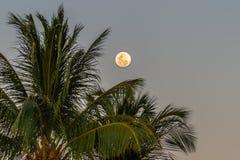 Księżyc W Pełni i drzewko palmowe fotografia royalty free