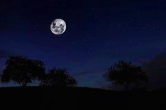 Księżyc W Pełni na lesie Fotografia Stock