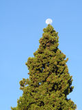 Księżyc w pełni nad Jedlinowym drzewem Obrazy Royalty Free