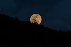 księżyc w pełni pagodowy shwedagon Yangon Myanmar zdjęcie stock