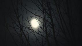 Księżyc W Pełni przy nocy drzewami zbiory wideo