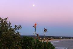 Księżyc w pełni w plaży z kwiatami Zdjęcia Royalty Free