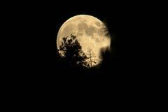 Księżyc w pełni wydźwignięcie Fotografia Royalty Free