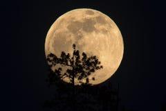 Księżyc w pełni wydźwignięcie Fotografia Stock