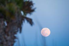 Księżyc wzrasta nad drzewkami palmowymi przy plażą Zdjęcie Royalty Free