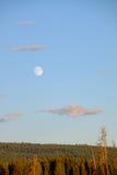 Księżyc wzrasta nad lasem Zdjęcie Stock