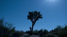 Księżyc wzrost nad Joshua drzewem zbiory wideo