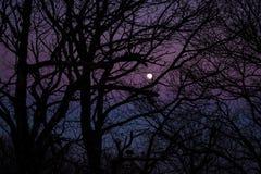 KSIĘŻYC ZA drzewami W zmierzchu zdjęcia royalty free