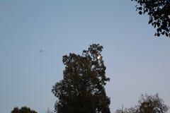 księżyc za drzewem Obrazy Stock