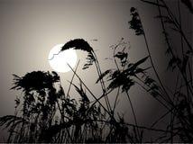 księżyc pośpiechy Zdjęcia Stock
