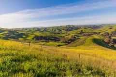 Küstenhügel Kalifornien Stockfoto