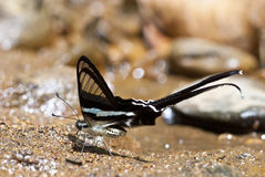 kształta skrzydło Fotografia Royalty Free