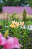 Kształtować teren kwiatów łóżka obraz stock