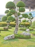 Kształtująca roślina Obrazy Royalty Free