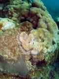 kształtujący koralowy serce Zdjęcia Stock