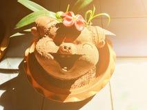 Kształtujący kwiatu garnek, uśmiechnięty i szczęśliwy obraz stock