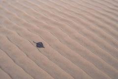 Kształtujący piasek i spadać liść na plaży w zimie Zdjęcia Royalty Free