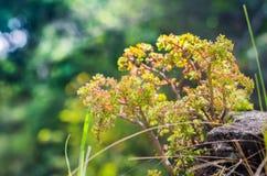 Kształtujący rośliny dorośnięcie na skale zdjęcia stock