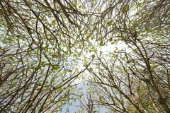 Kształtuje teren dużego drzewa fotografia royalty free