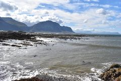 Kształtuje teren i wyrzucać na brzeg w bettyzatoce z ślicznymi Jackass pingwinami blisko Kapsztad, Południowa Afryka Obrazy Stock