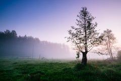 kształtuje teren mglistą wiosna Fotografia Royalty Free