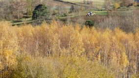 Kształtuje teren w livradois forez, Auvergne, France obrazy stock