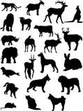 kształty zwierzęcych Zdjęcie Stock