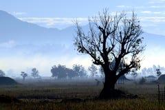 Kształt drzewna sylwetka. Obrazy Stock