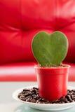 kształtny serca drzewo Zdjęcie Royalty Free