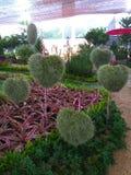 kształtny serca drzewo Dla walentynki zdjęcie stock