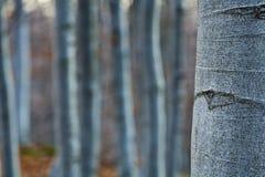 kształtuje drzewa Obrazy Stock