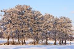 kształtuje teren drzew biel zima Obrazy Royalty Free