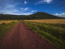 Kształtuje teren sposób w pszenicznym polu zdjęcia stock